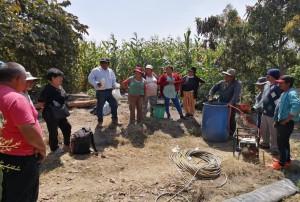 Control de plagas en cultivo de palto utilizando insecticidas orgánicos
